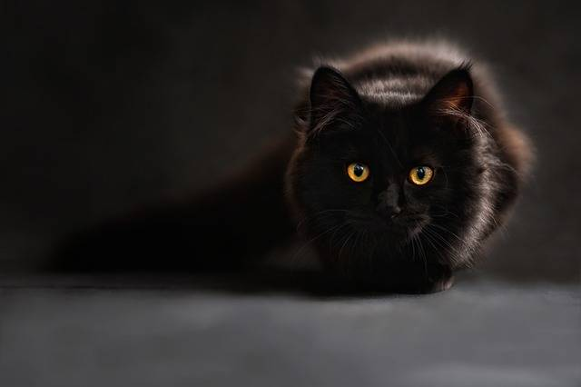 Cat Silhouette Cats - Free photo on Pixabay (81131)