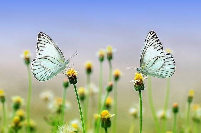 Butterfly Insect Macro - Free photo on Pixabay (153125)