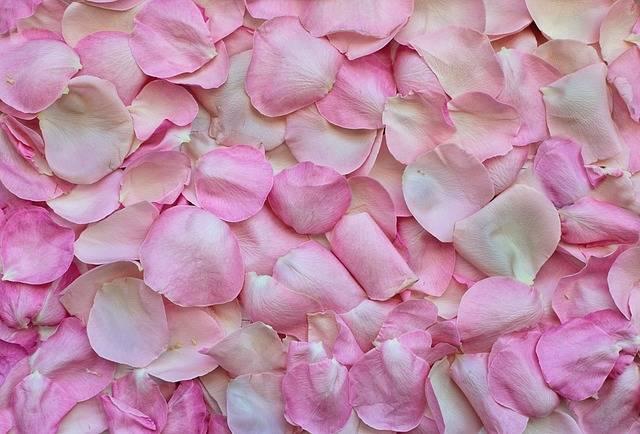 Rose Petals Pink Background - Free photo on Pixabay (176434)