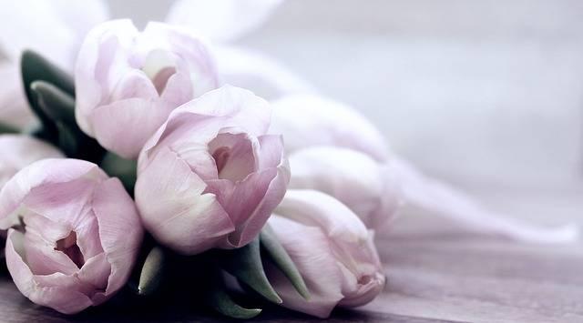 Tulips Tulipa Flowers - Free photo on Pixabay (176447)