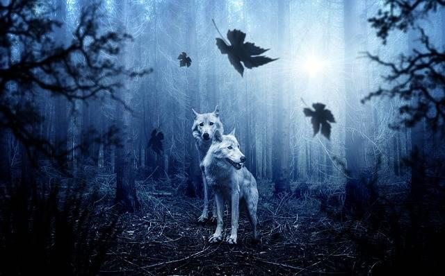 Wolf Forest Dark - Free photo on Pixabay (208735)