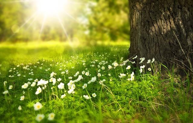 Spring Tree Flowers - Free photo on Pixabay (256818)