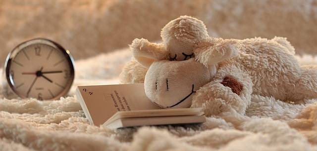 Still Life Lamb Stuffed Animal - Free photo on Pixabay (268667)