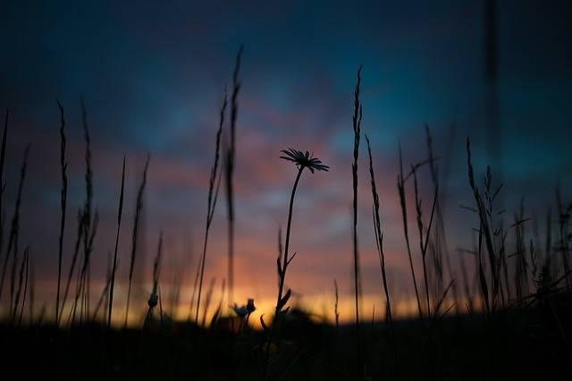Sunrise Desktop Background Flower - Free photo on Pixabay (270620)