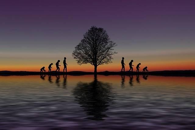Evolution Development Forward - Free image on Pixabay (273396)