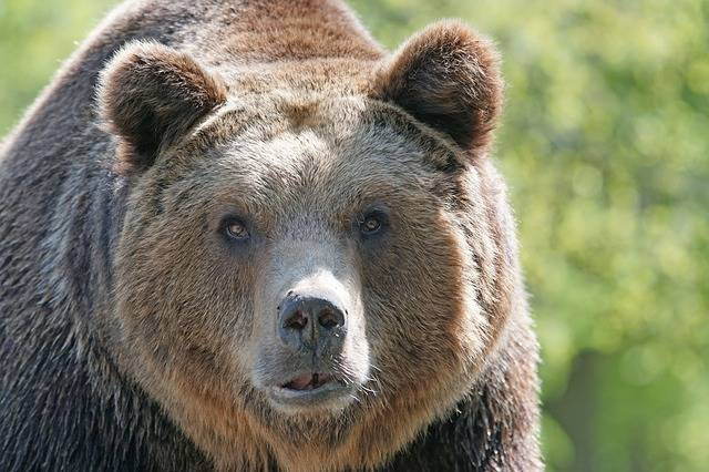 Brown Bear Master Petz Nature Park - Free photo on Pixabay (283943)