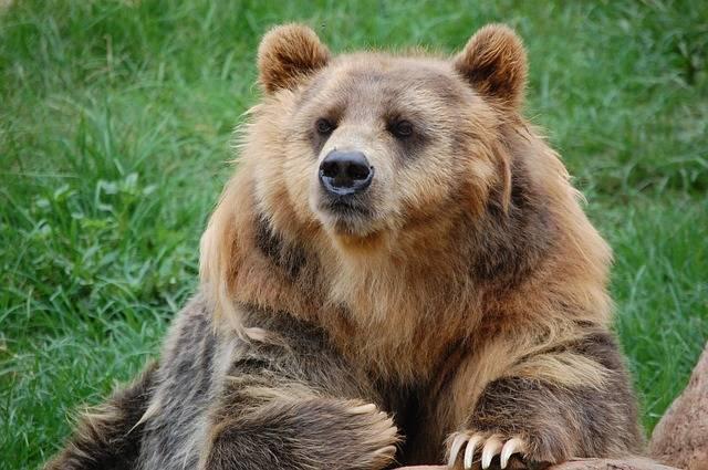 Bear Zoo Fur - Free photo on Pixabay (284629)