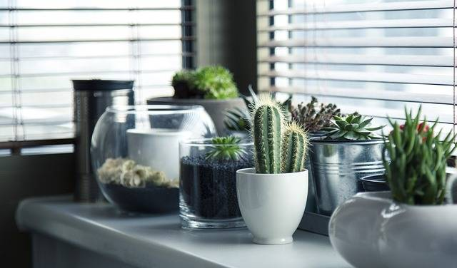 Pots Plants Cactus - Free photo on Pixabay (292883)