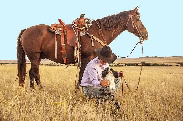 Cowboy Horse Dog - Free photo on Pixabay (296043)