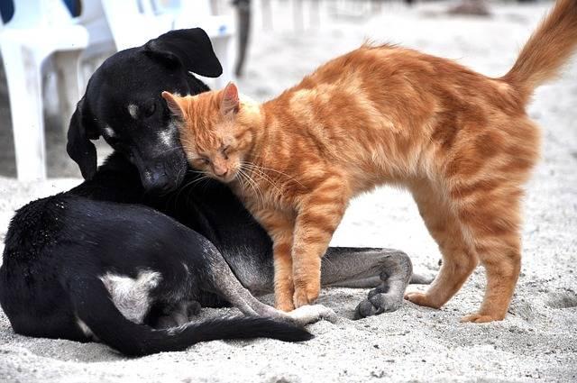 Dog Cat Animals - Free photo on Pixabay (296052)