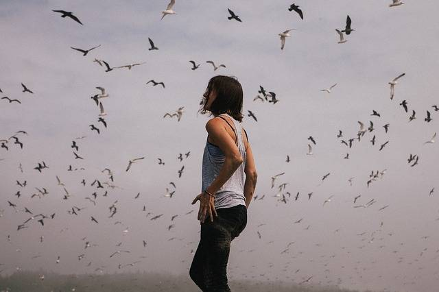 Hipster Birds Flight - Free photo on Pixabay (312899)