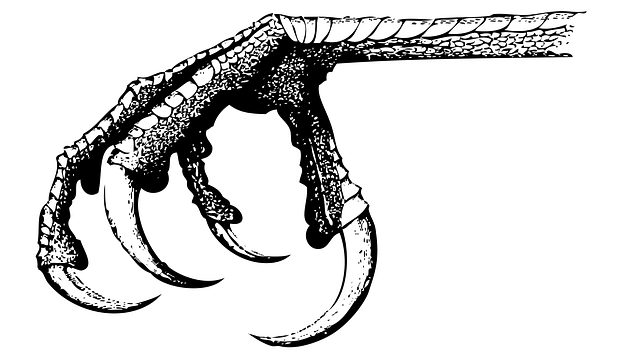Bird Claw Reptilian - Free vector graphic on Pixabay (321638)