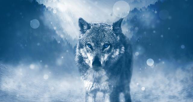 Wolf Predator Animal - Free image on Pixabay (321871)