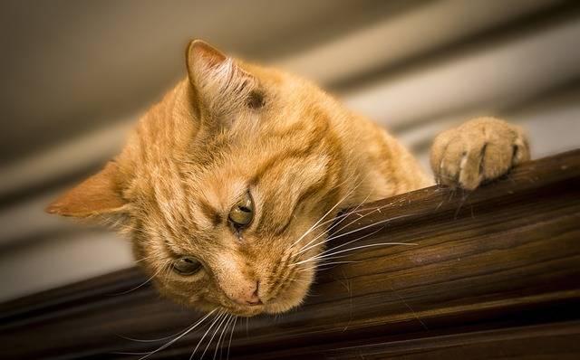 Cat Feline Animal - Free photo on Pixabay (322297)