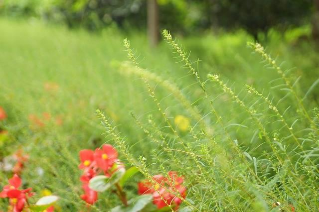 Flower Green Grass Artistic - Free photo on Pixabay (365874)