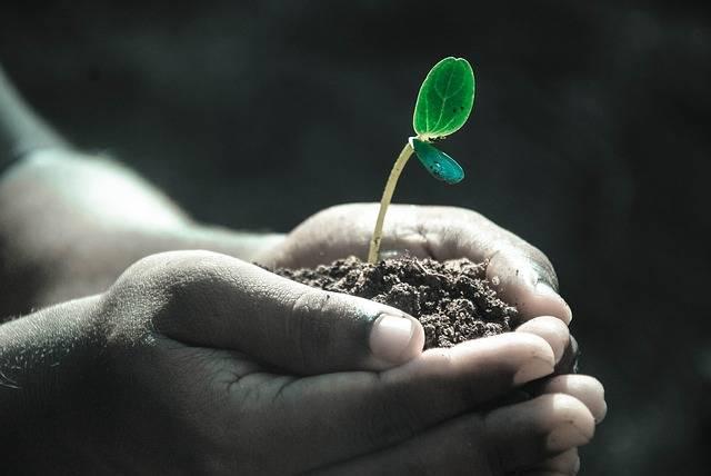 Hands Macro Plant - Free photo on Pixabay (369204)
