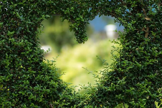 Heart Herzchen Love - Free photo on Pixabay (370283)