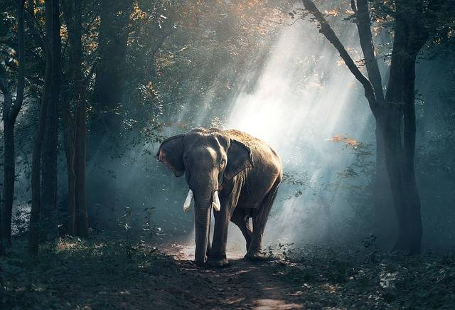 Elephant Animals Asia - Free photo on Pixabay (373335)