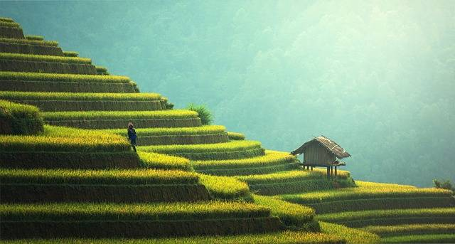 Agriculture Rice Plantation - Free photo on Pixabay (373344)