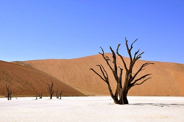 Tree Desert Namibia Clay - Free photo on Pixabay (373369)