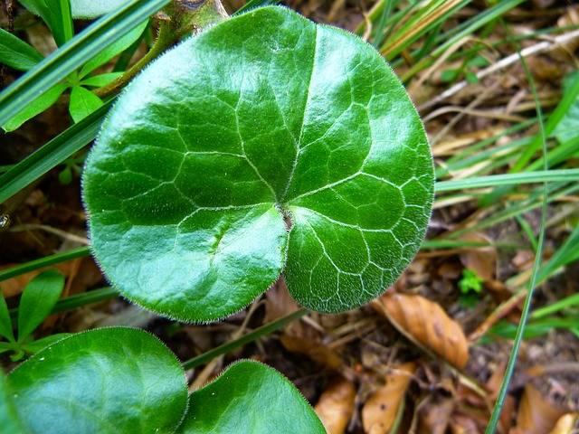 Leaf Shiny Gloss - Free photo on Pixabay (376793)