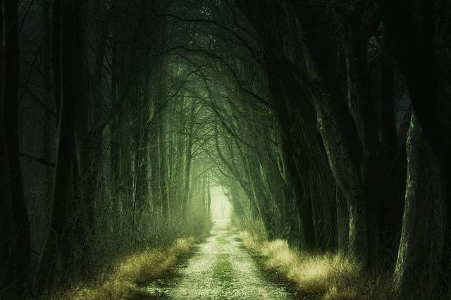 Secret Forest Darkness - Free photo on Pixabay (376806)