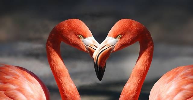 Flamingo Valentine Heart - Free photo on Pixabay (391583)