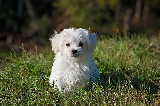 Dog Young Small - Free photo on Pixabay (396894)