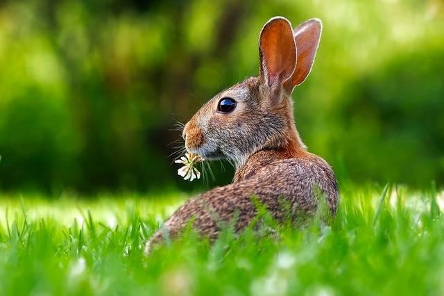 Rabbit Hare Animal - Free photo on Pixabay (398347)