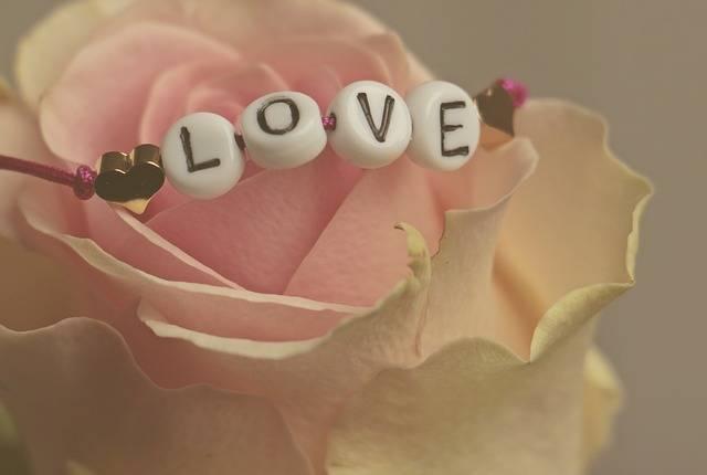 Love Rose Flower - Free photo on Pixabay (464627)