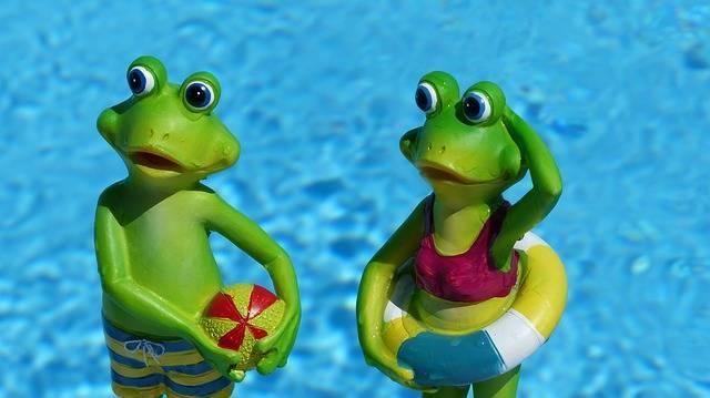Frog Swim Vacations - Free photo on Pixabay (548444)