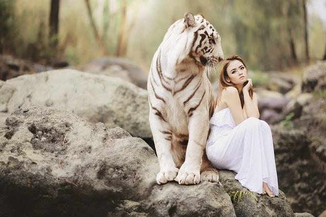 Nature Animal World White Bengal - Free photo on Pixabay (552930)
