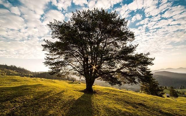 Tree Dawn Nature - Free photo on Pixabay (553074)