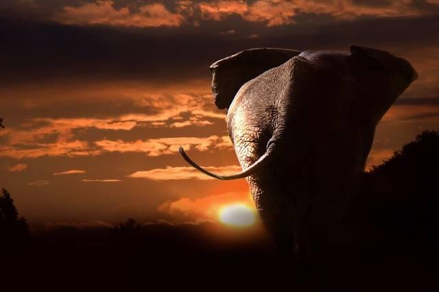 Elephant African Bush - Free photo on Pixabay (563680)