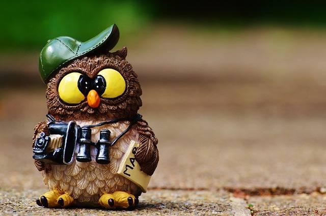 Owl Photographer Photograph - Free photo on Pixabay (564675)