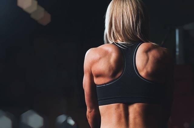 Training Rmuscles Back - Free photo on Pixabay (607862)