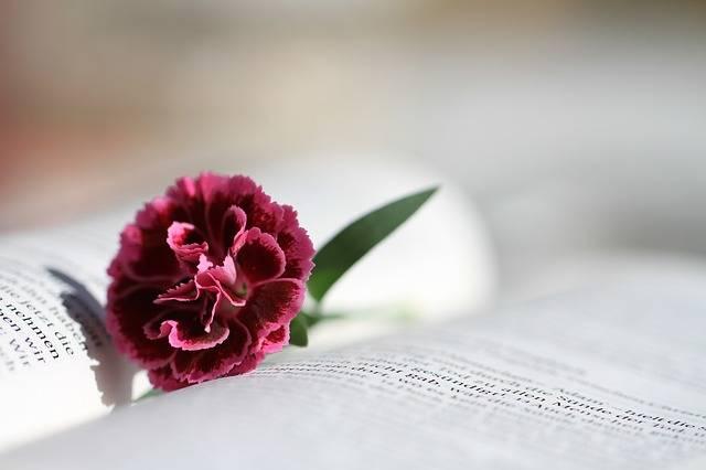 Bible Read Christianity - Free photo on Pixabay (609427)