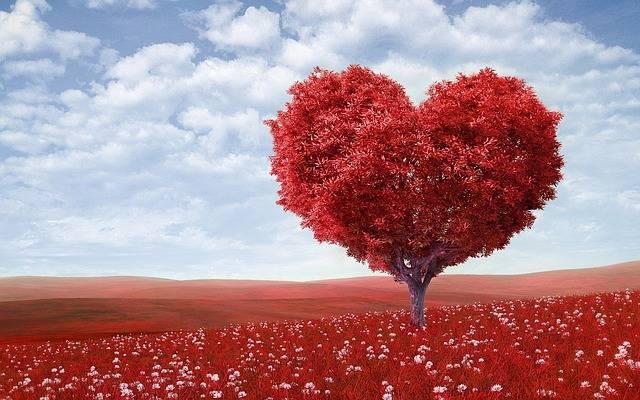 Heart-Shape Tree Red - Free photo on Pixabay (726638)