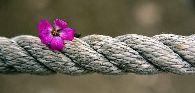 Rope Blossom Bloom - Free photo on Pixabay (742647)