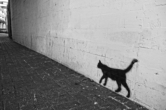 Graffiti Wall Cat - Free photo on Pixabay (759310)