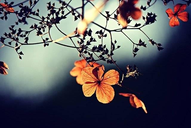 Flower Branch Twig Autumn - Free photo on Pixabay (759610)