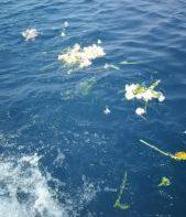 故人のお見送りに自然葬「海洋散骨」(NK北海道)