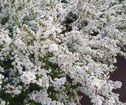ゆきやなぎのひみつ〜身近な植物について知ろう〜