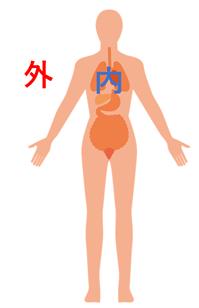 「体内」:間違ったイメージ図