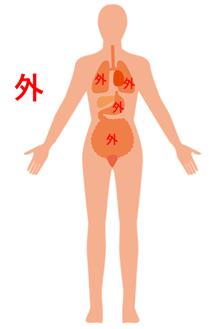 「体内」:正しいイメージ図