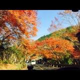 みさき|奈良市 大宮町のキャバクラ|Nerine(ネリネ)