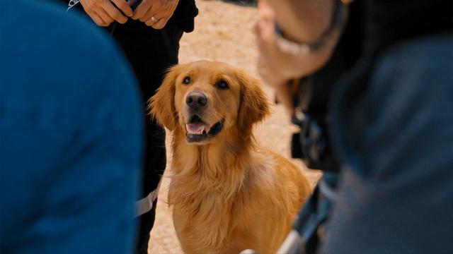 エンツォ レーサーになりたかった犬とある家族の物語(特典映像付)