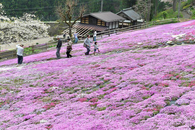 国田家の芝桜を愛する会