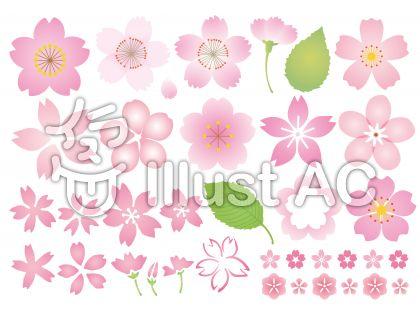 桜の花色々