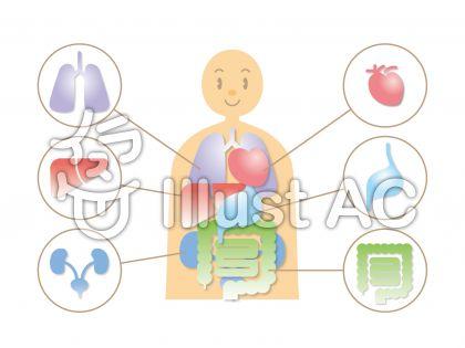 人体_内臓図